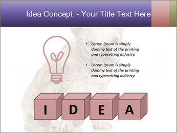 Dirty dog PowerPoint Template - Slide 80