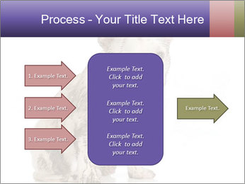 Dirty dog PowerPoint Template - Slide 85