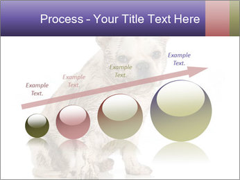 Dirty dog PowerPoint Template - Slide 87