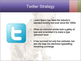 Dirty dog PowerPoint Template - Slide 9