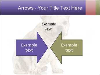 Dirty dog PowerPoint Template - Slide 90