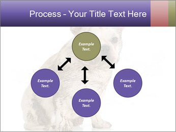 Dirty dog PowerPoint Template - Slide 91