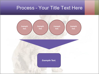 Dirty dog PowerPoint Template - Slide 93