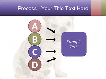 Dirty dog PowerPoint Template - Slide 94