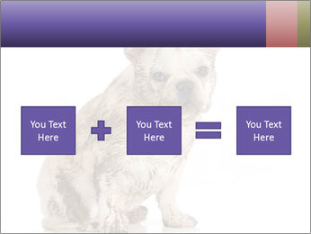 Dirty dog PowerPoint Template - Slide 95
