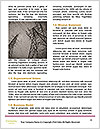 0000094734 Word Templates - Page 4