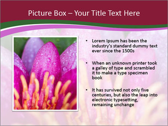 Pink water lily PowerPoint Templates - Slide 13
