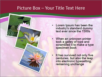 Pink water lily PowerPoint Templates - Slide 17