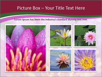 Pink water lily PowerPoint Templates - Slide 19