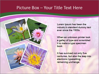 Pink water lily PowerPoint Templates - Slide 23