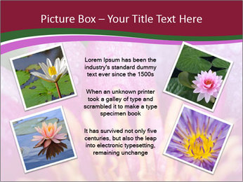 Pink water lily PowerPoint Templates - Slide 24