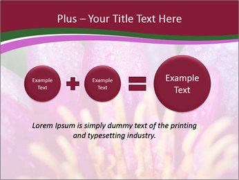 Pink water lily PowerPoint Templates - Slide 75