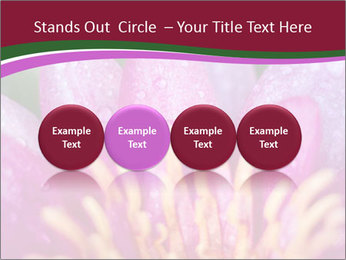 Pink water lily PowerPoint Templates - Slide 76