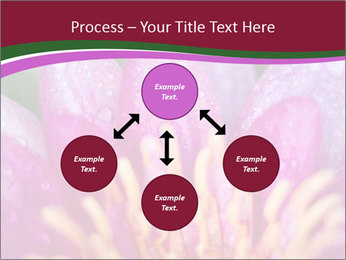 Pink water lily PowerPoint Templates - Slide 91