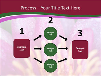 Pink water lily PowerPoint Templates - Slide 92