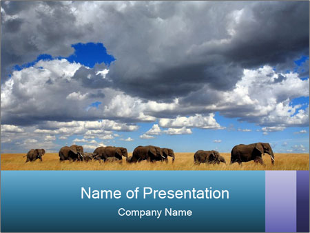 Elephants marching PowerPoint Template