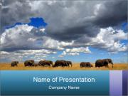 Elephants marching PowerPoint Templates