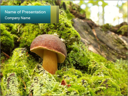 Fungus on a tree PowerPoint Template