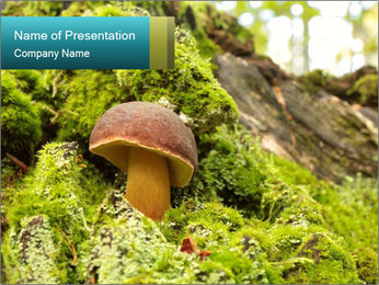Fungus on a tree PowerPoint Template - Slide 1