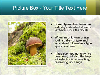 Fungus on a tree PowerPoint Template - Slide 13