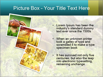Fungus on a tree PowerPoint Template - Slide 17