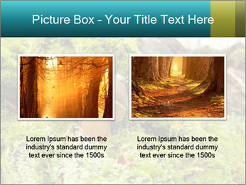 Fungus on a tree PowerPoint Template - Slide 18