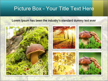Fungus on a tree PowerPoint Template - Slide 19
