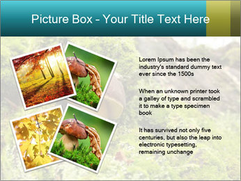 Fungus on a tree PowerPoint Template - Slide 23