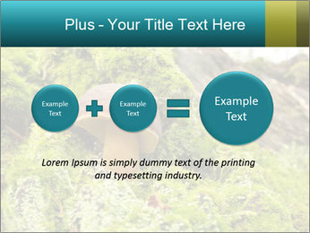 Fungus on a tree PowerPoint Template - Slide 75