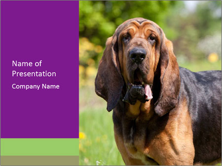 Nice bloodhound PowerPoint Templates