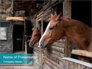 Horses in their stable PowerPoint Templates