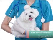Small cute Maltese PowerPoint Templates