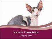 0000096144 PowerPoint Templates