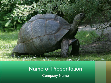 0000096501 PowerPoint Template