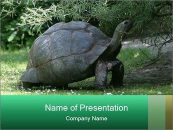 0000096501 PowerPoint Template - Slide 1