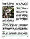 0000096501 Word Template - Page 4