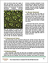 0000096509 Word Template - Page 4