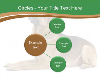 0000096545 PowerPoint Template - Slide 79