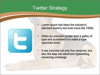 0000096545 PowerPoint Template - Slide 9
