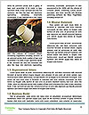 0000096594 Word Template - Page 4