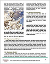 0000096600 Word Template - Page 4