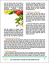 0000096603 Word Template - Page 4