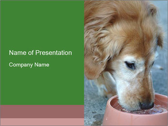 0000096617 PowerPoint Template - Slide 1