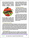 0000096666 Word Template - Page 4