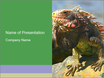 0000096670 PowerPoint Template - Slide 1