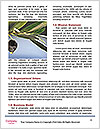 0000096689 Word Template - Page 4