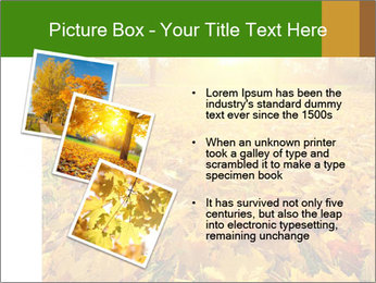 Colorful foliage PowerPoint Template - Slide 17