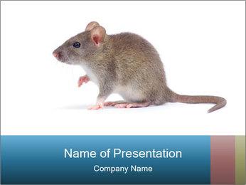 Rat PowerPoint Template - Slide 1