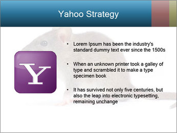 Rat PowerPoint Template - Slide 11