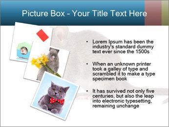 Rat PowerPoint Template - Slide 17